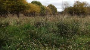Ickenham Marsh