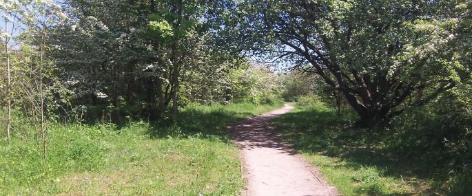 Kippax Meadows - Fiona Shipp