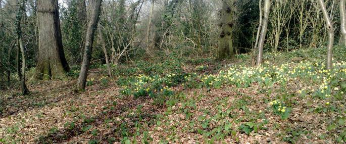 Betty Daw's Wood - Gloucestershire WT