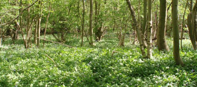 Arle Grove - Gloucestershire WT