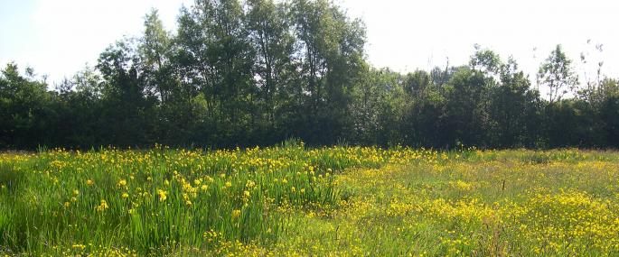 Arnold's Meadow - Lincolnshire Wildlife Trust