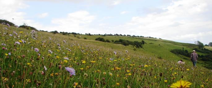 Arreton Down - Hamsphire & Isle of Wight Wildlife Trust