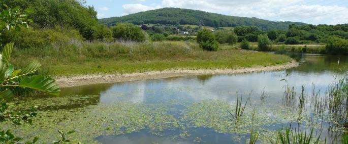 Bathampton Meadow - Avon Wildlife Trust