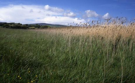 Ballalough Reedbeds - Manx Wildlife Trust