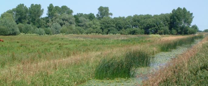 Baston Fen - Lincolnshire Wildlife Trust