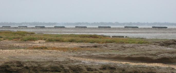 Bradwell Shell Bank Nature Reserve - Essex Wildlife Trust - Essex Wildlife Trust