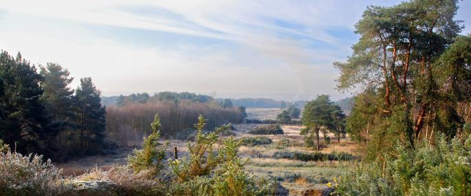 Brentmoor Heath - © Ingrid Heel