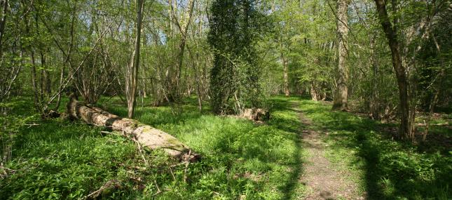 Bull's Wood - Suffolk Wildlife Trust