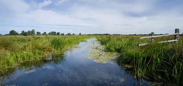 Castle Marshes - Suffolk Wildlife Trust