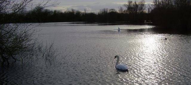Chigborough Lakes Nature Reserve - Essex Wildlife Trust - Essex Wildlife Trust