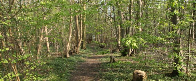 Combs Wood - Suffolk Wildlife Trust