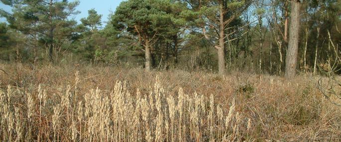Nichols Moss - Cumbria Wildlife Trust