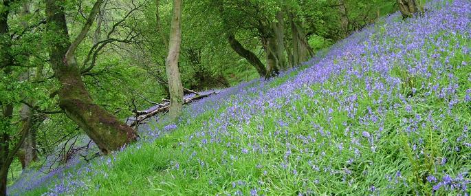 - Cumbria Wildlife Trust