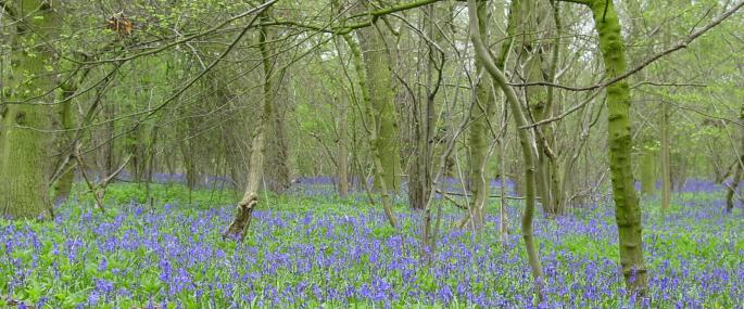 Dole Wood - Lincolnshire Wildlife Trust