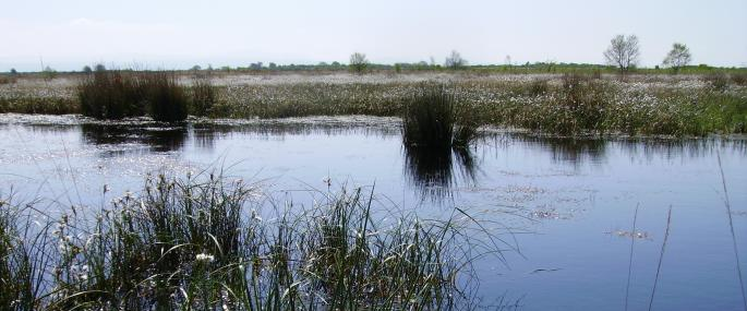 Pool at Drumburgh Moss -