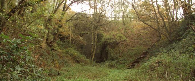 Duckmanton Railway Cutting - Derbyshire Wildlife Trust