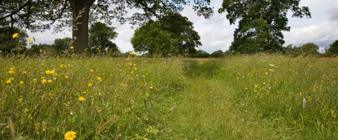 Foster's Green & Eades Meadows - Paul Lane