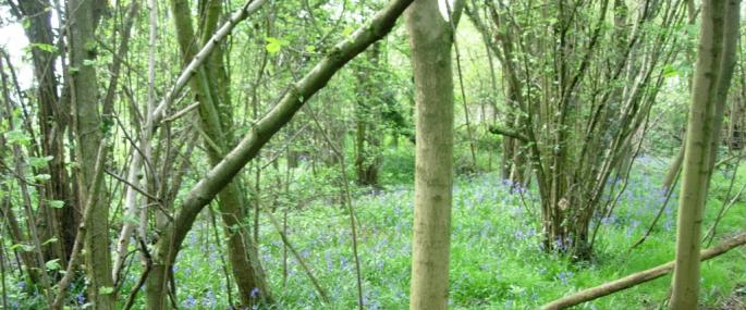 Fancott woods and meadows - Wildlife Trust