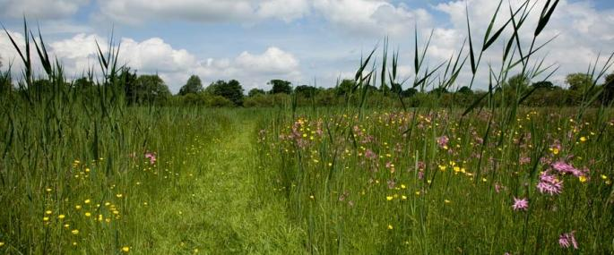 Feckenham Wylde Moor - Paul Lane