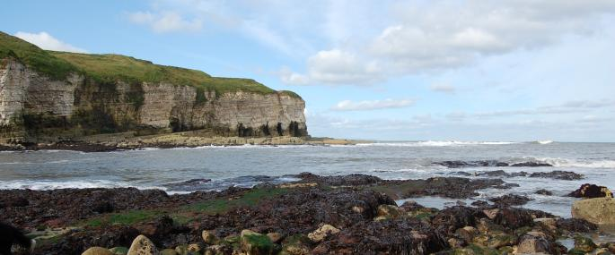 Flamborough Cliffs Nature Reserve - Kirsten Smith