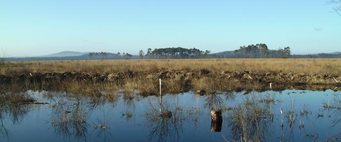 Foulshaw Moss Nature Reserve -
