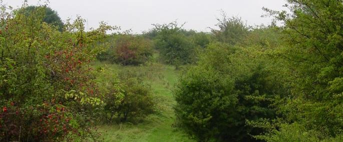 Greetwell Hollow - Lincolnshire Wildlife Trust
