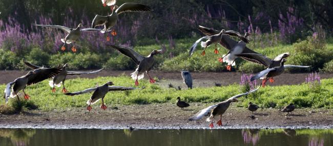 Coombe Hill Canal & Meadows - Zsuzsanna Bird