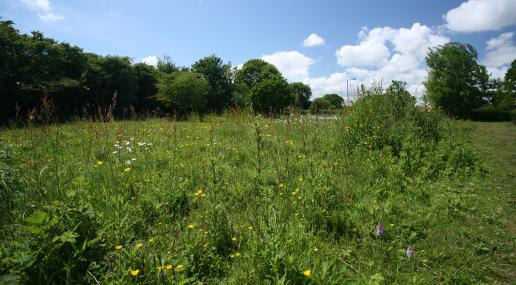 Gunton Meadow - Suffolk Wildlife Trust