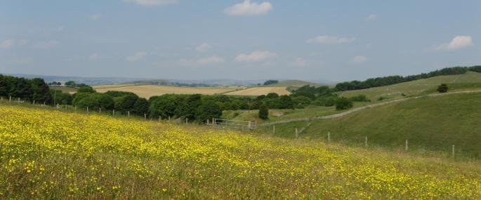 Hartington Meadows - Derbyshire Wildlife Trust