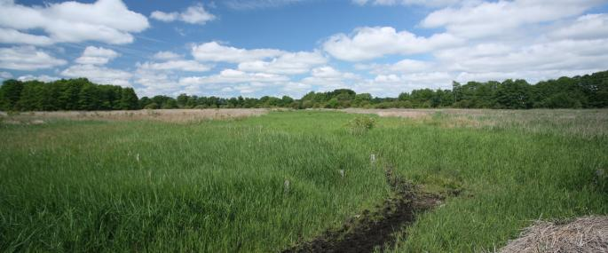 Hopton Fen - Suffolk Wildlife Trust