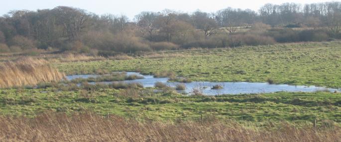 Howlands Marsh Nature Reserve - Essex Wildlife Trust - Essex Wildlife Trust