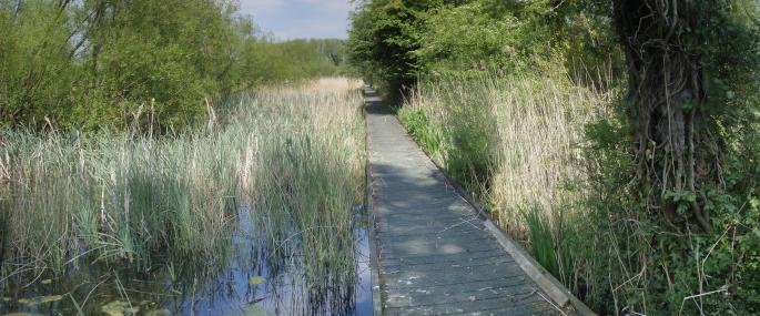 Littleton Brick Pits - Avon Wildlife Trust
