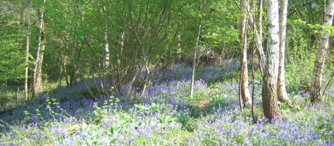 Mapperley Wood - Derbyshire Wildlife Trust