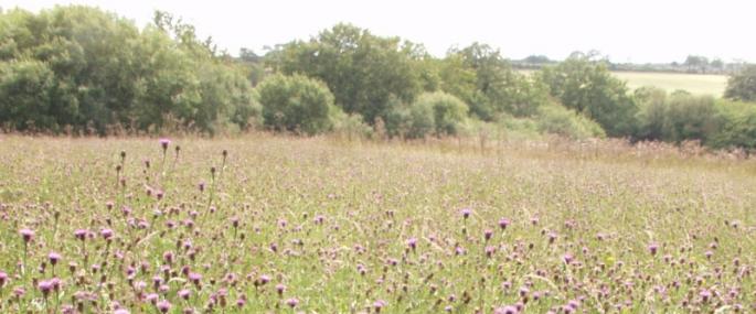 Meshaw Moor - Devon Wildlife Trust