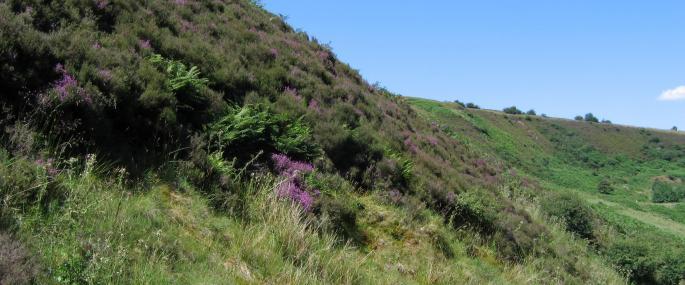 Overdale - Derbyshire Wildlife Trust