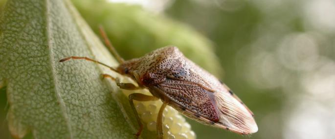 Parent bug - Philip Precey - Philip Precey