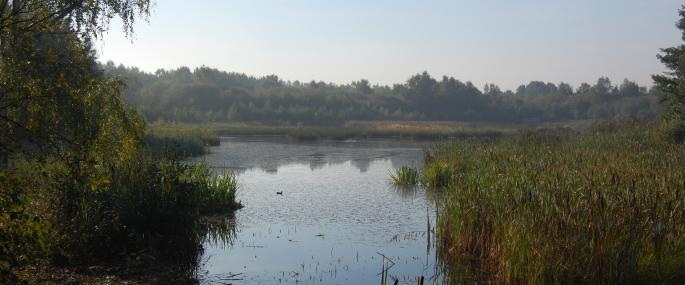Potteric Carr Nature Reserve - Kirsten Smith