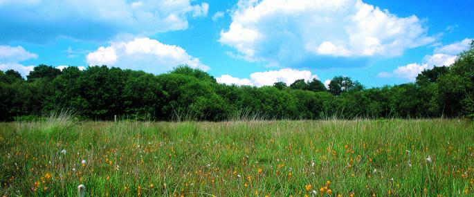 Wildmoor Heath - BBOWT