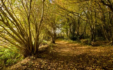 Reydon Wood - Suffolk Wildlife Trust