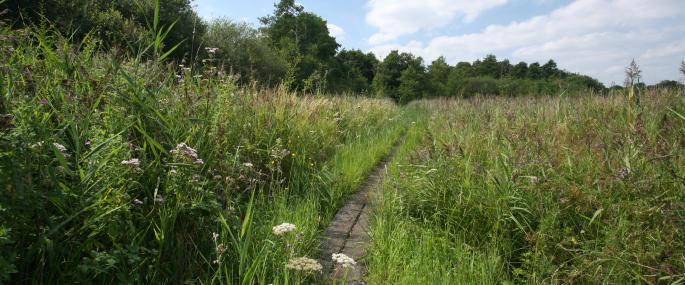 Roydon Fen - Suffolk Wildlife Trust