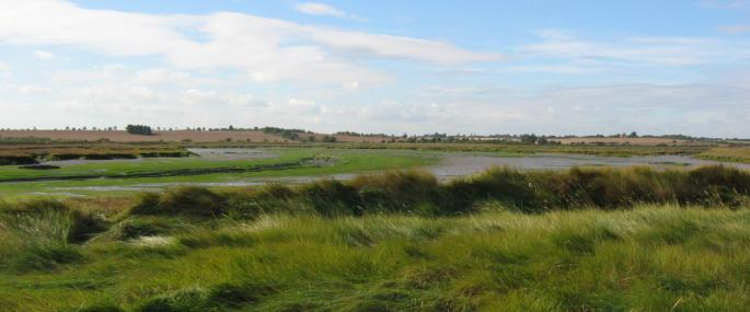 Skippers Island Nature Reserve - Essex Wildlife Trust - Essex Wildlife Trust