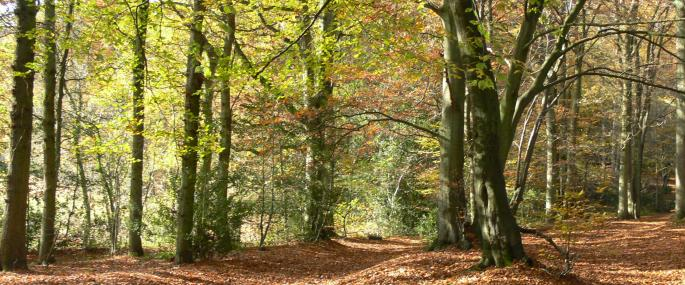 Staffhurst Wood - © Katy Gower