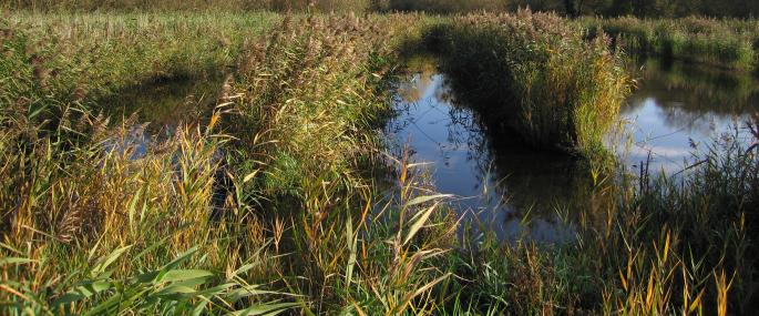 Stanborough Reedmarsh - HMWT