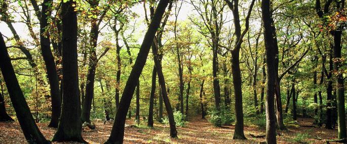 sydenham hill wood and coxu0027s walk