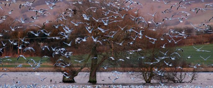 Tring Reservoir (Wilstone) - David Howlett