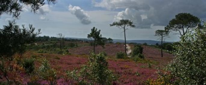 Upton Heath - Dorset Wildlife Trust