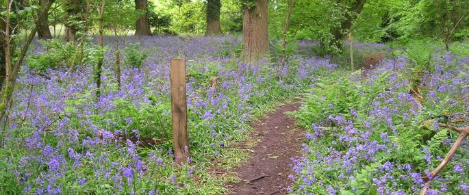 Weston Big Wood  - Avon Wildlife Trust