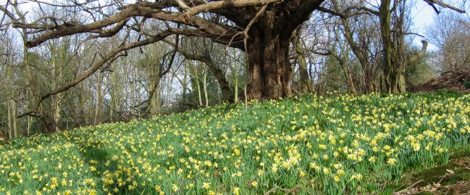 Warley Place Nature Reserve - Essex Wildlife Trust - Essex Wildlife Trust