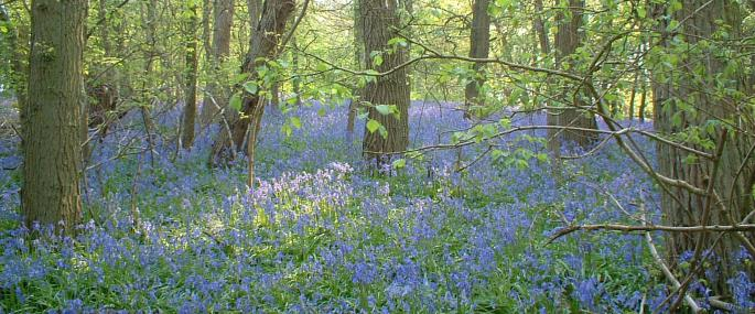 Weeleyhall Wood Nature Reserve - Essex Wildlife Trust -