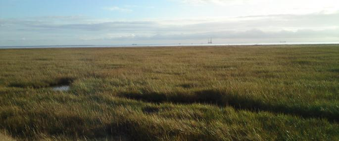 Welwick Saltmarsh Nature Reserve - Philip Whelpdale
